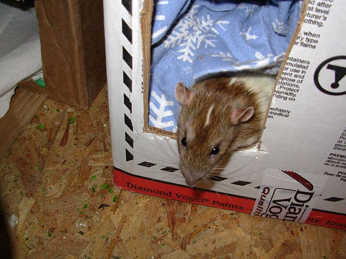 Amelia checks out the new rag box